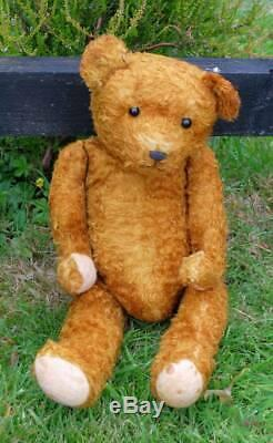Very Old German Bear With Character